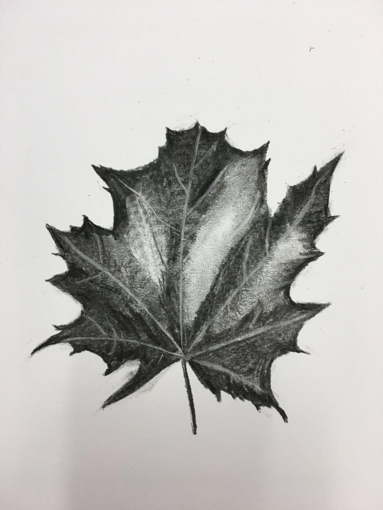 Autumn leaf - pencil & charcoal